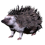 Hedgehog Pet inventory icon.png