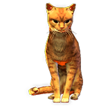 Orange Cat Pet inventory icon.png