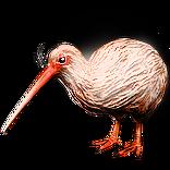Albino Kiwi Pet inventory icon.png