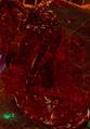Blood Elemental.png