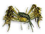 Craicic Savage Crab