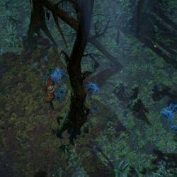 Западный лес (Акт 2)