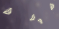 Painting 5.png