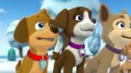 The Snowpup Trio