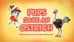 Pups Save an Ostrich (HQ)