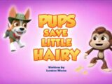 Pups Save Little Hairy