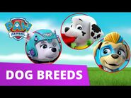 PAW Patrol Learn about Dog Breeds! - Learn with PAW Patrol