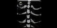 Armor-bone