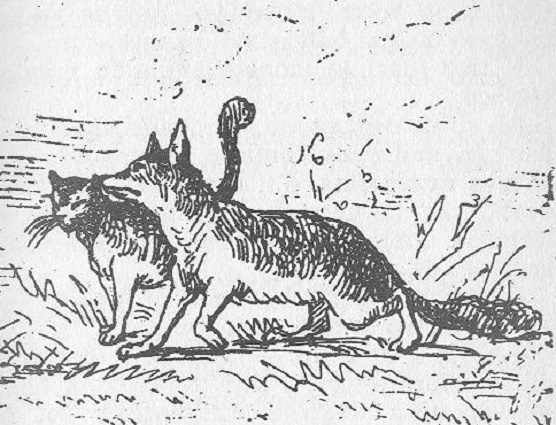 Fox and the Cat