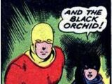 Black Orchid (Harvey)