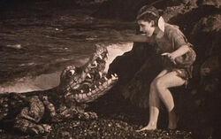 The-crocodile.jpg