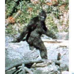 Bigfoot-live.jpg