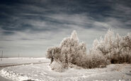 Winter landscape in Latvia, 2012