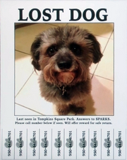 Lost Dog 950 641 6701.png