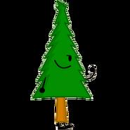 Pine Tree 1a