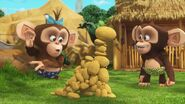 Chimpanzees-Madagascar-A-little-wild
