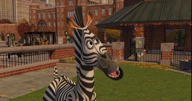 Zebra 9.jpg
