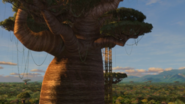The Boabab Tree in Madagascar 02