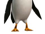Hans (puffin)