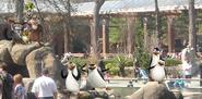 Penguins Of Madagascar IRL