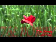 The Poppy a poem written by Jane Taylor