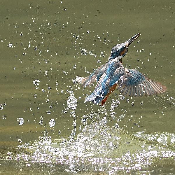 As Kingfishers Catch Fire / GMH