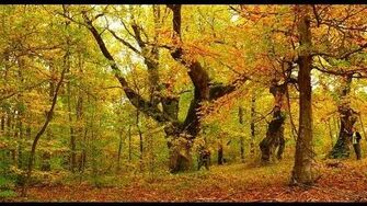 """Autumn_Scene,""_by_Basil_Dowling"