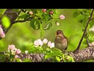 Charlotte Smith - On the Departure of the Nightingale