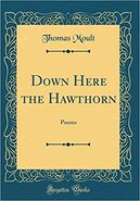 Down here the hawthorne