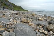 Lyme-regis-fossil-beach