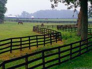 Horse-farm goshen kentucky