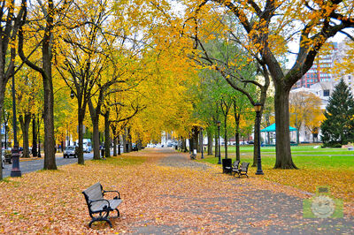 Autumn leaves in New Haven.jpg