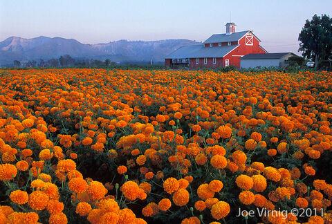 Santa-paula-california-barn.jpg