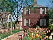 Colonial house with tulips