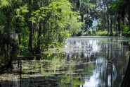 Camden swamp