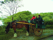 Horse and cart outside Ross Castle