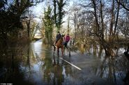 Horses better than cars in flood