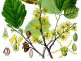 Flora of Pern