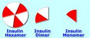 Insulin hex di mon8