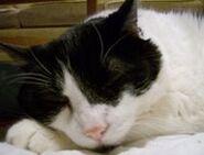 Buster Girl Sleeping-1-