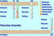 Porcineinsulin8