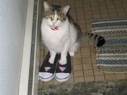 Buddie in norlenes shoes 004