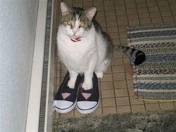 Buddie in norlenes shoes 004.jpg