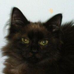 Feline Blindness cases