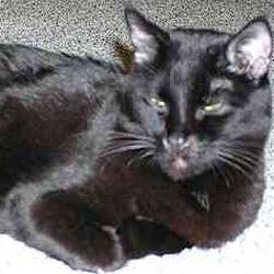 Feline difficult regulation cases