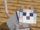 Sven The Cat