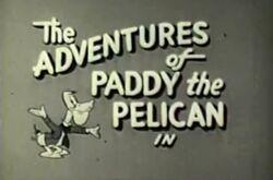 Paddy the pelican.jpg