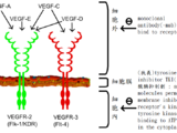 Molecularly Targeted therapeutic agents靶向治療藥品-target/biomarker/treat