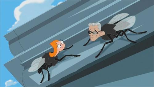 Human Head Fly