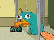 Amazing Perry